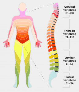 Spinal Injury, Spinal Cord Injury